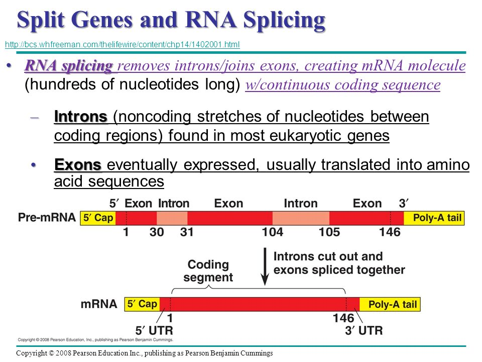Split Genes and RNA Splicing