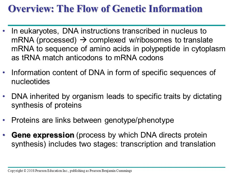Overview: The Flow of Genetic Information