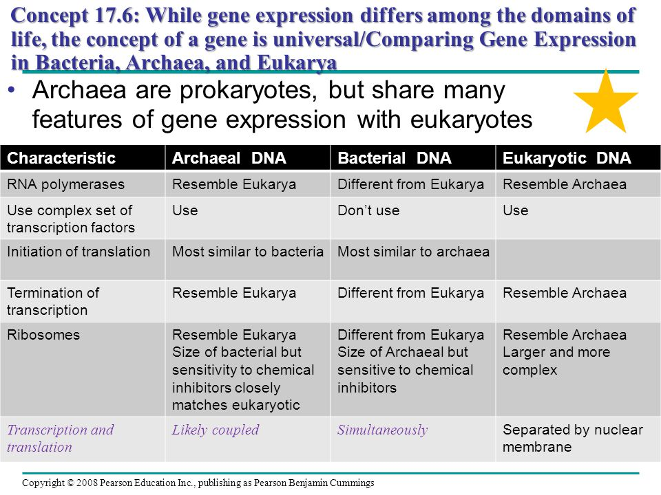 Concept 17.6: While gene expression differs among the domains of life, the concept of a gene is universal/Comparing Gene Expression in Bacteria, Archaea, and Eukarya