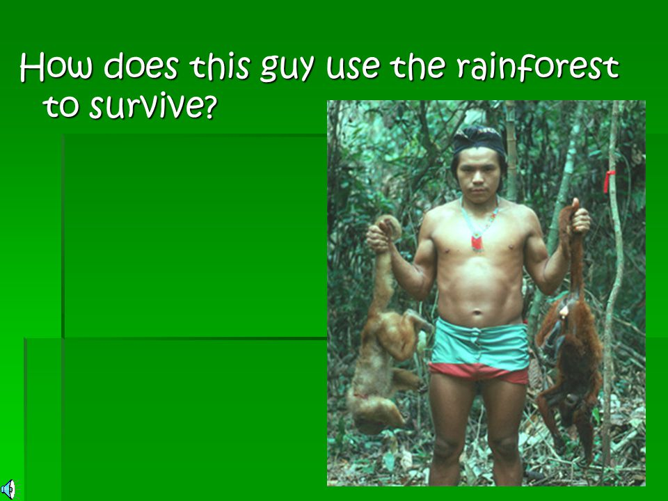 How does this guy use the rainforest to survive