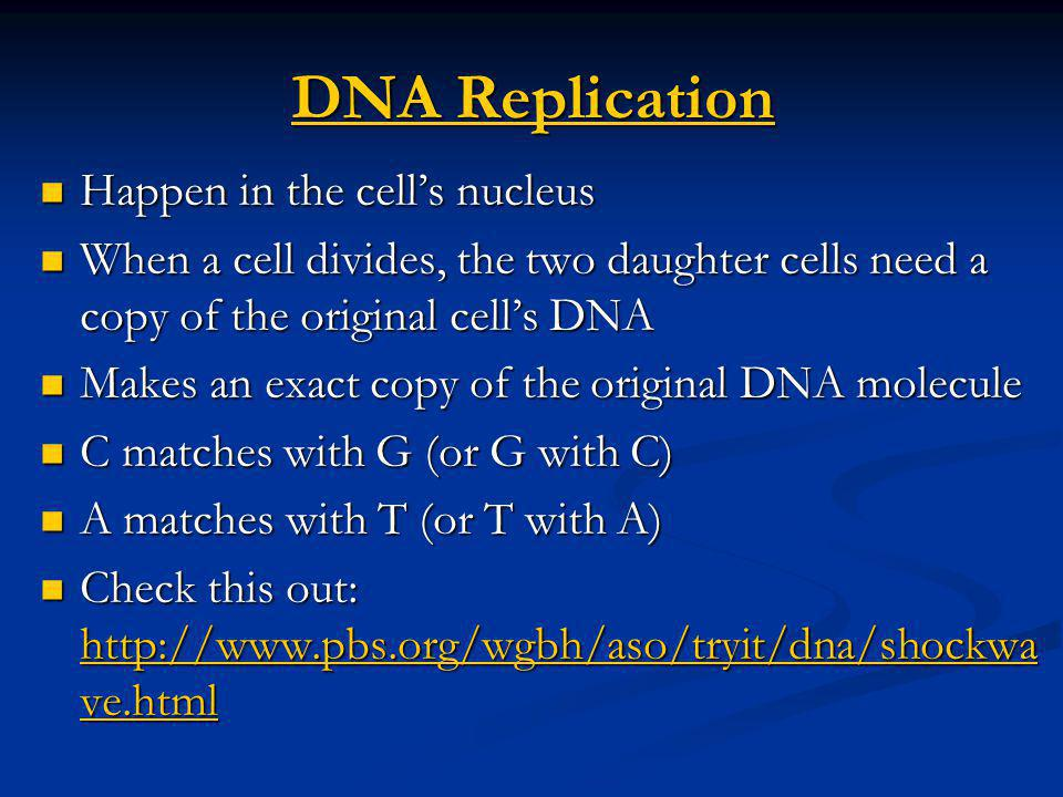 DNA Replication Happen in the cell's nucleus