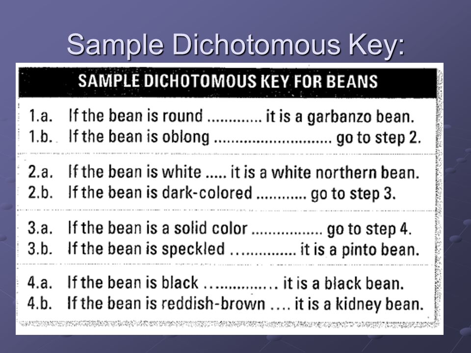 Sample Dichotomous Key: