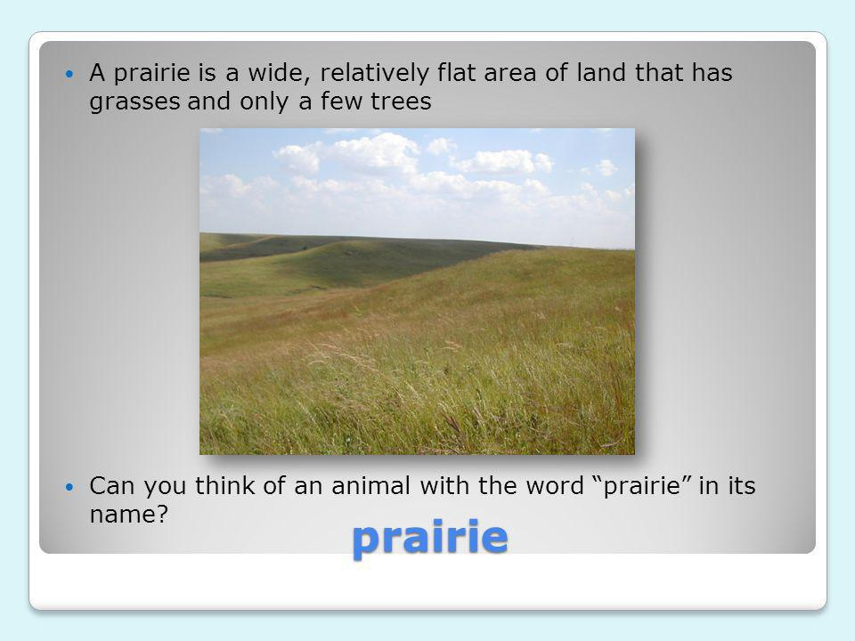 A prairie is a wide, relatively flat area of land that has grasses and only a few trees