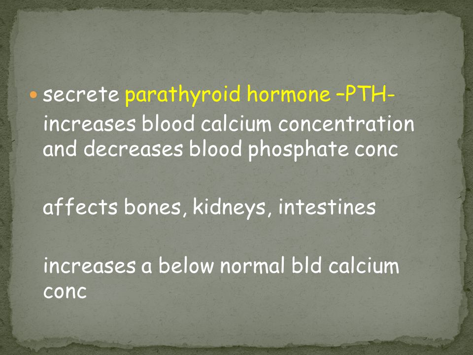 secrete parathyroid hormone –PTH-