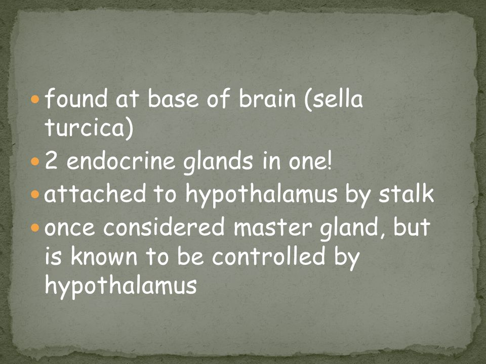 found at base of brain (sella turcica)