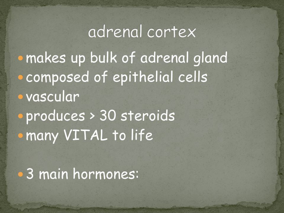 adrenal cortex makes up bulk of adrenal gland