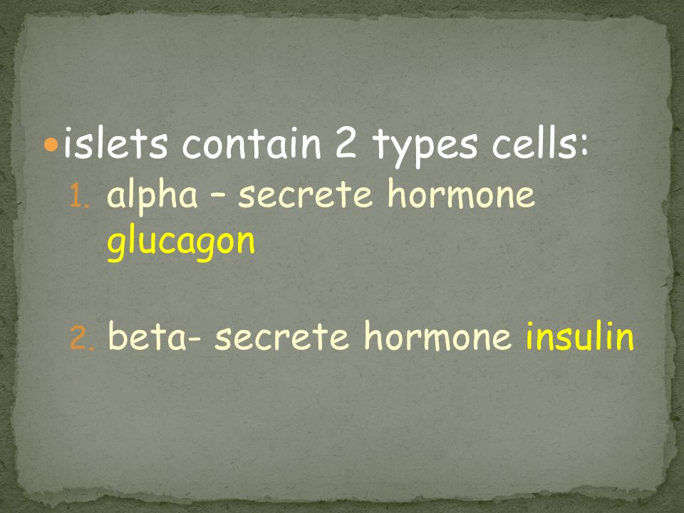 islets contain 2 types cells: