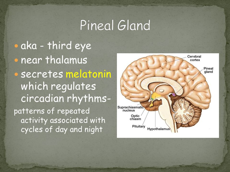 Pineal Gland aka - third eye near thalamus