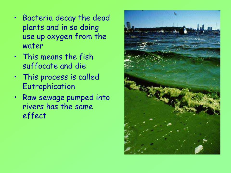 Bacteria decay the dead plants and in so doing use up oxygen from the water