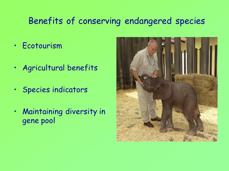 Benefits of conserving endangered species
