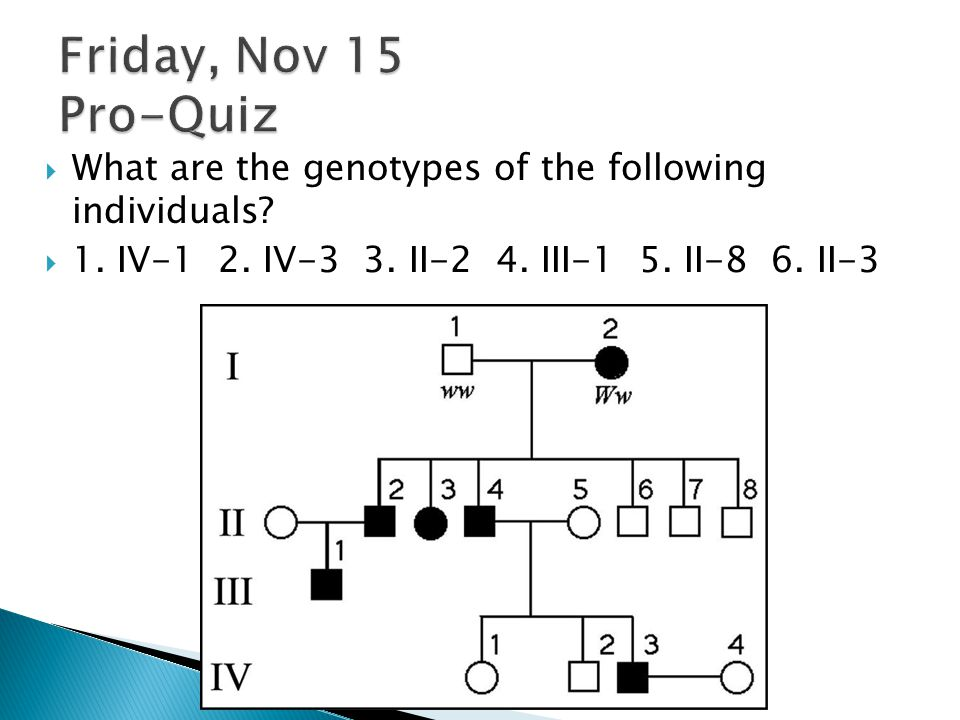Friday, Nov 15 Pro-Quiz What are the genotypes of the following individuals.