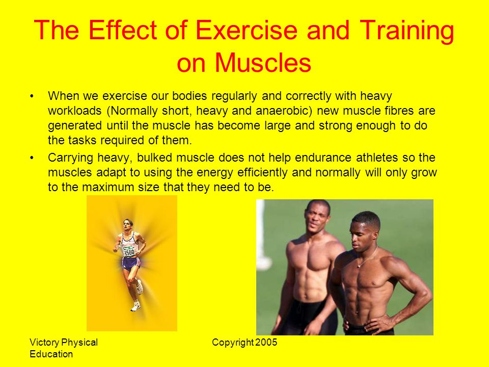 The Effect of Exercise and Training on Muscles
