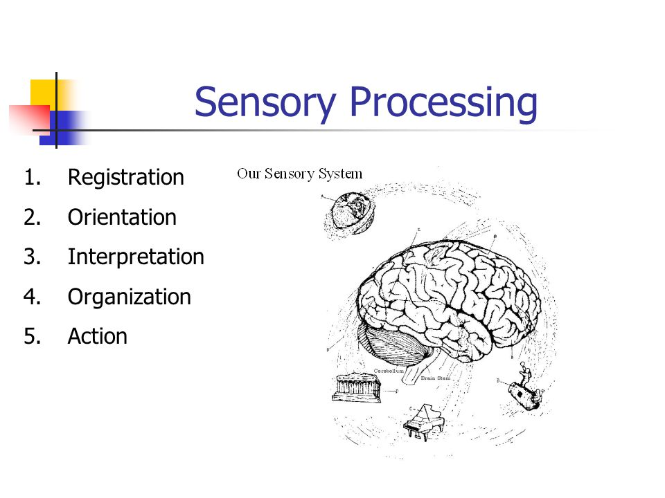 Sensory Processing 1. Registration 2. Orientation 3. Interpretation