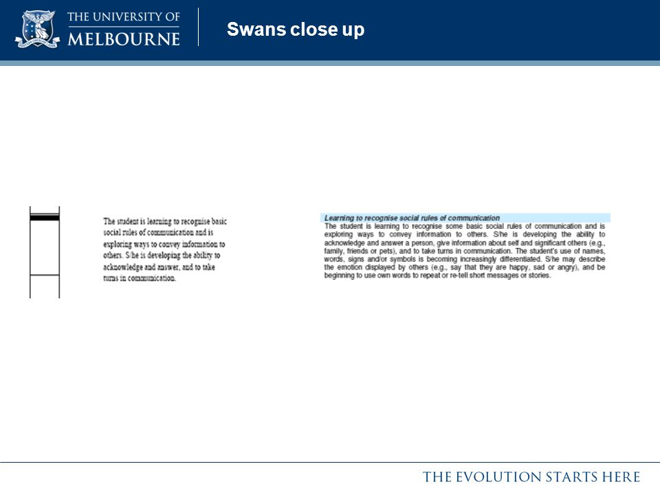 Swans close up