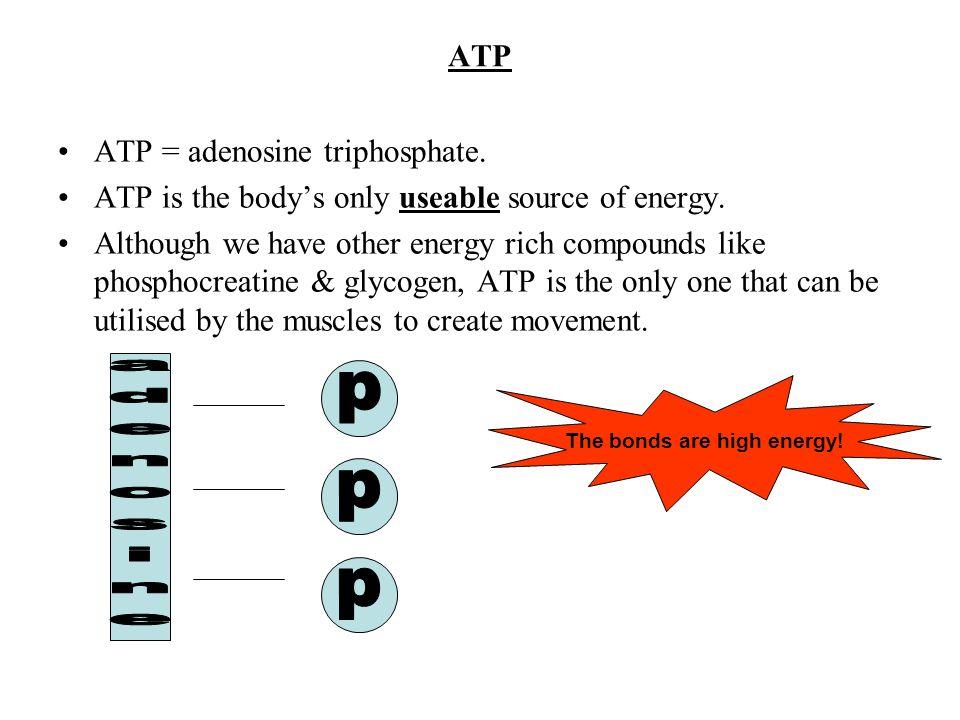p p p adenosine ATP ATP = adenosine triphosphate.