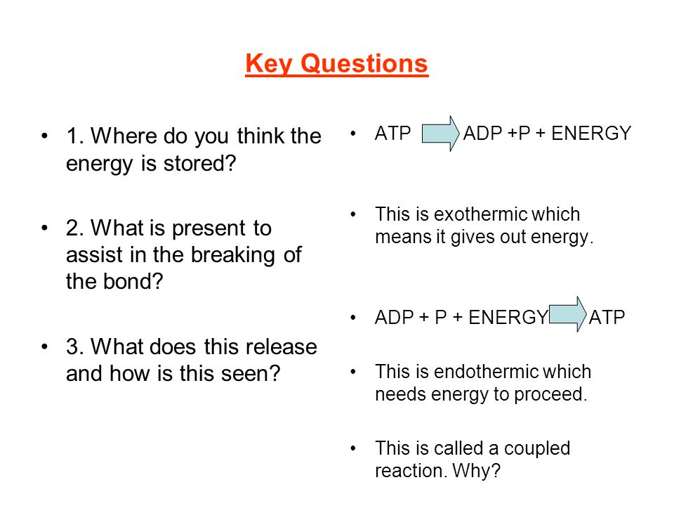Key Questions 1. Where do you think the energy is stored