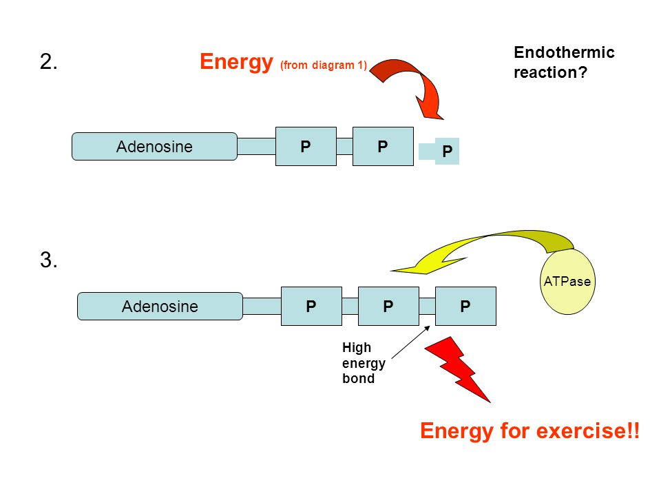 2. Energy (from diagram 1) 3. Energy for exercise!!