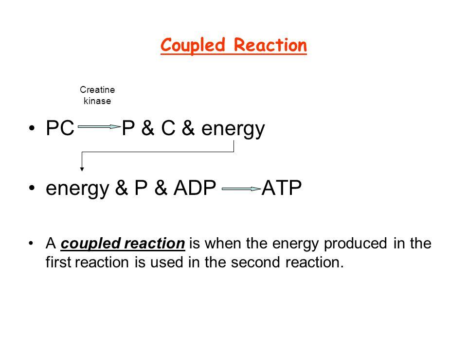 PC P & C & energy energy & P & ADP ATP Coupled Reaction