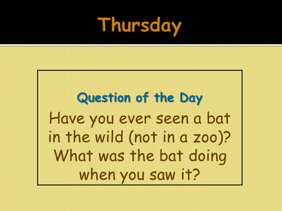 Thursday Question of the Day. Have you ever seen a bat in the wild (not in a zoo).