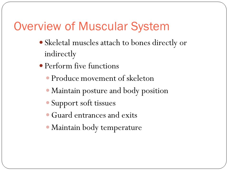 Overview of Muscular System