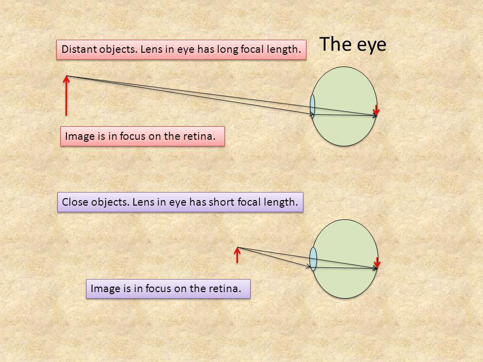 The eye Distant objects. Lens in eye has long focal length.
