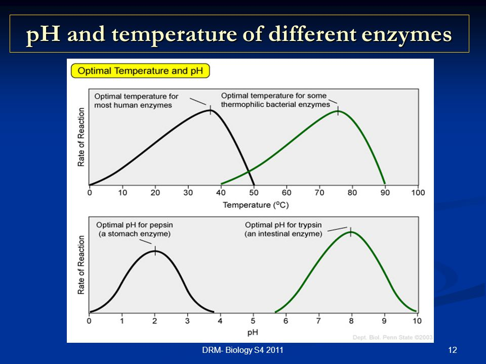 pH and temperature of different enzymes