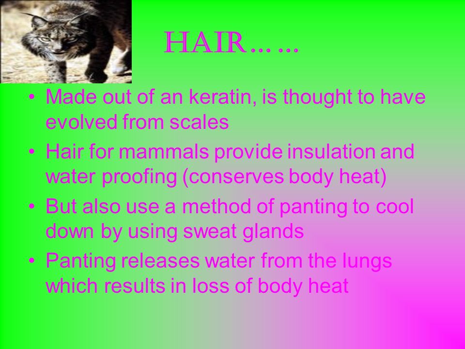 Hair…… Made out of an keratin, is thought to have evolved from scales