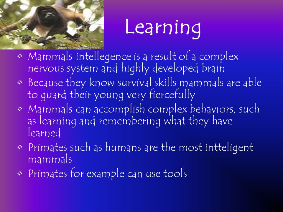 Learning Mammals intellegence is a result of a complex nervous system and highly developed brain.