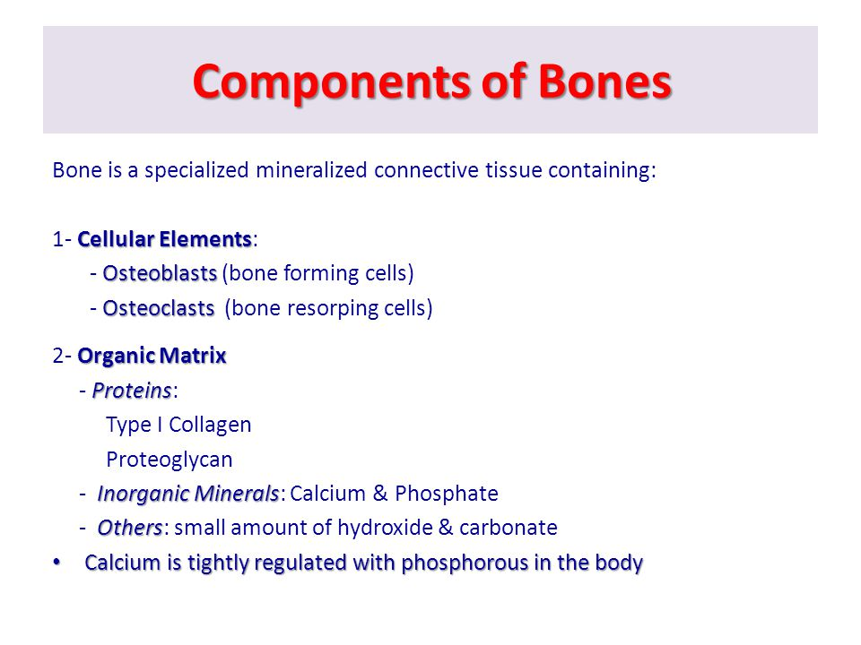 Components of Bones Bone is a specialized mineralized connective tissue containing: 1- Cellular Elements: