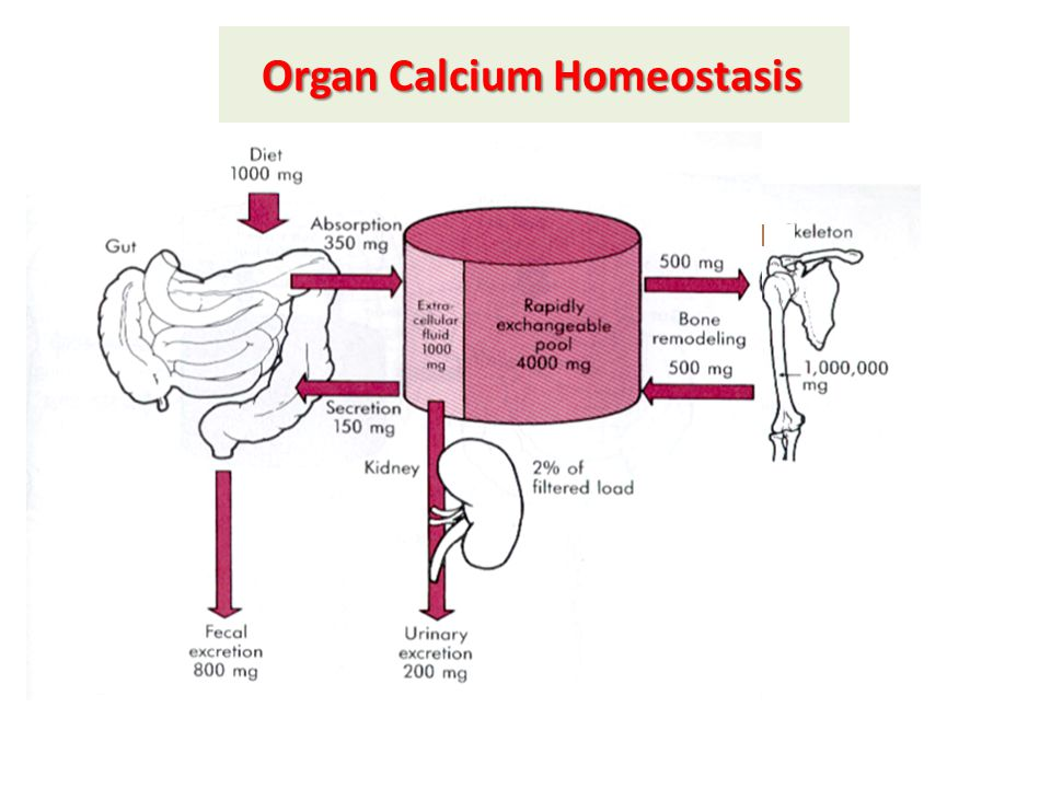 Organ Calcium Homeostasis