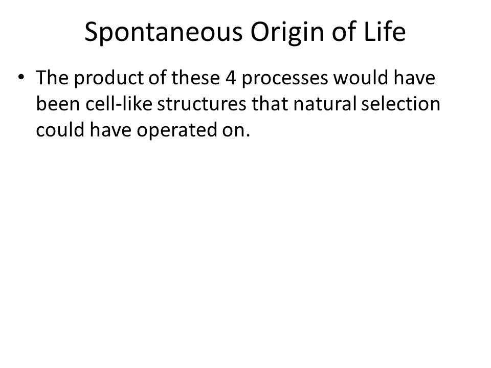 Spontaneous Origin of Life