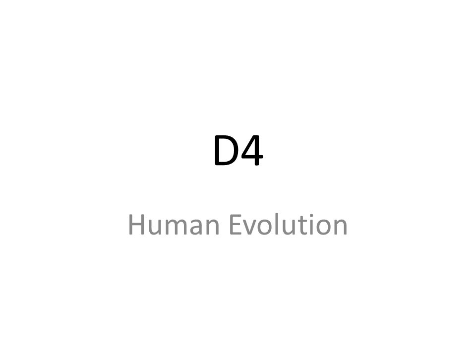 D4 Human Evolution