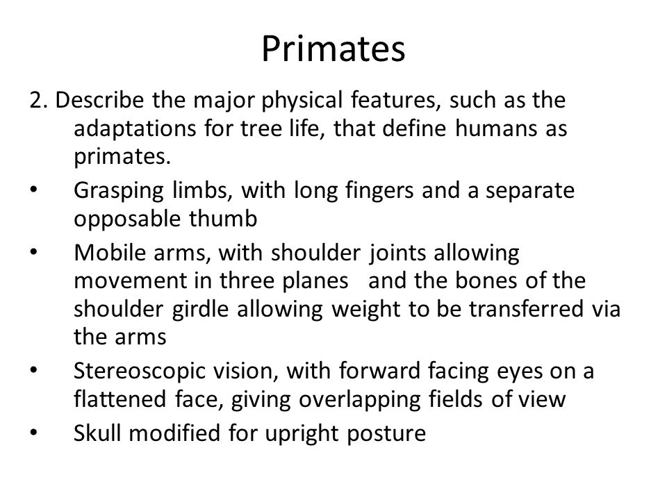 Primates 2. Describe the major physical features, such as the adaptations for tree life, that define humans as primates.