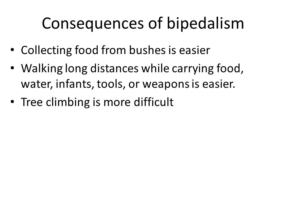 Consequences of bipedalism