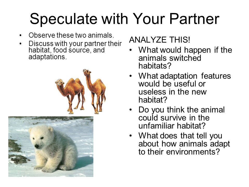 Speculate with Your Partner