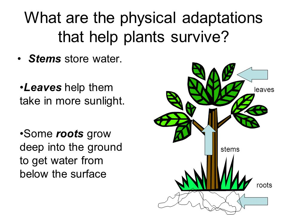 What are the physical adaptations that help plants survive