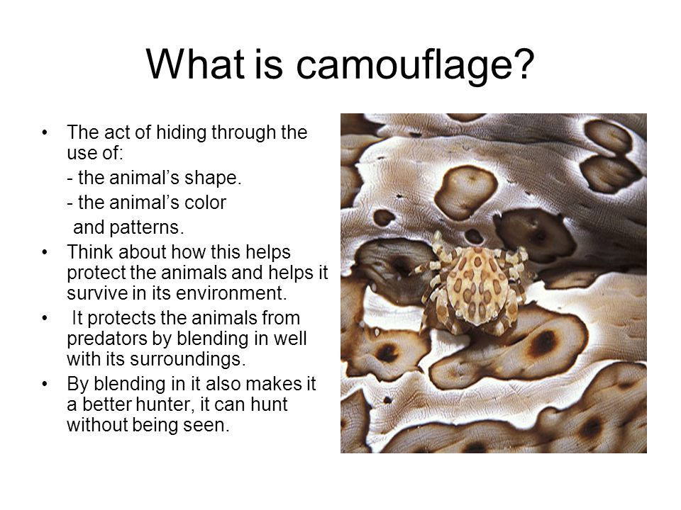 What is camouflage The act of hiding through the use of: