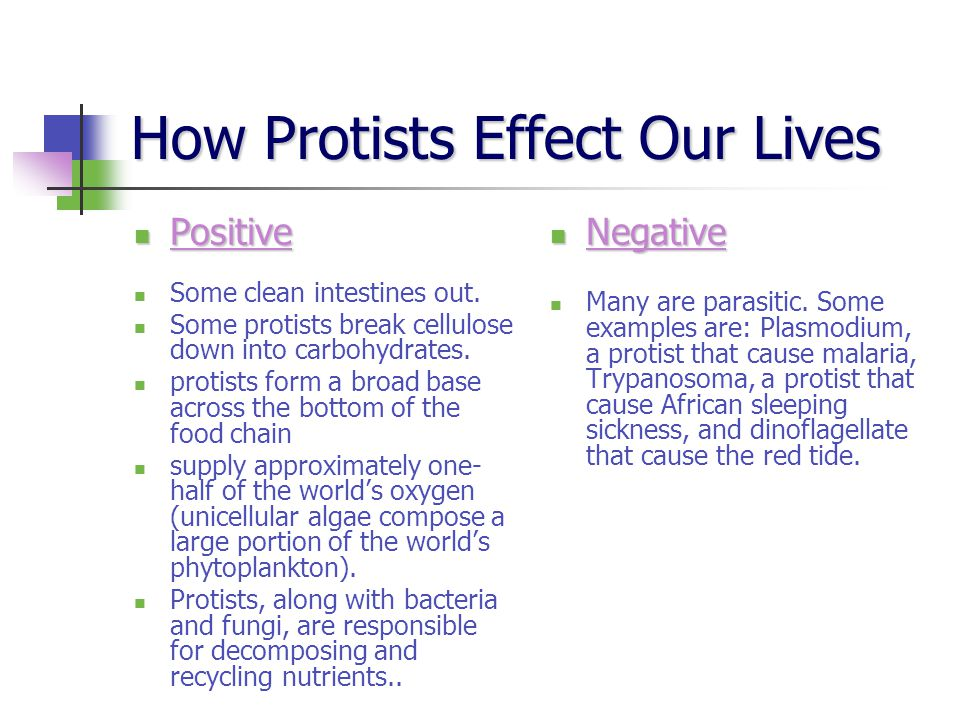 How Protists Effect Our Lives