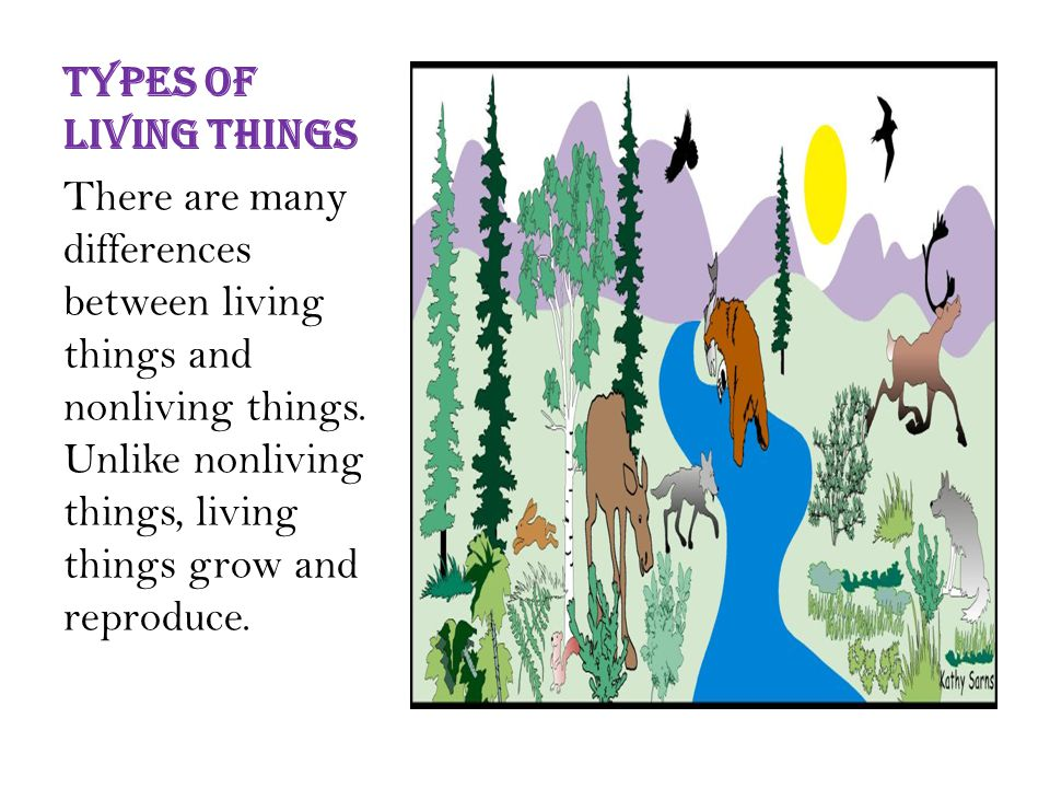 Types of living things