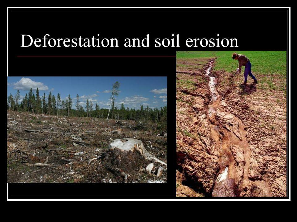 Deforestation and soil erosion