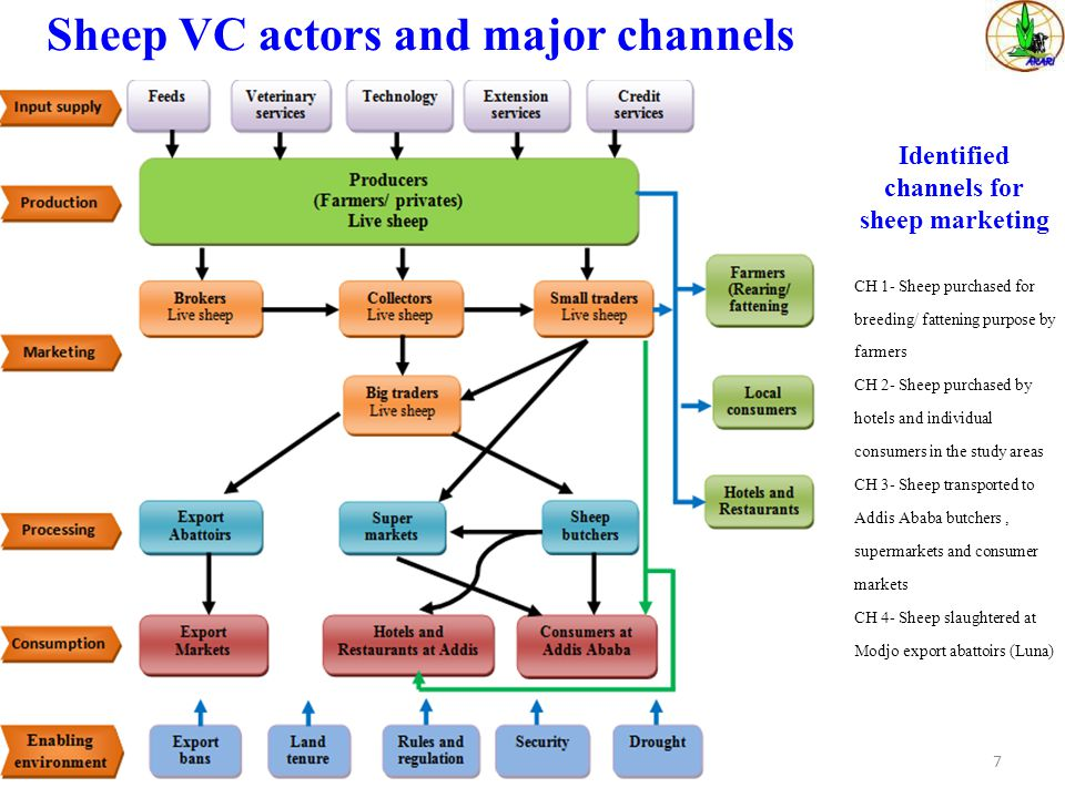 Sheep VC actors and major channels