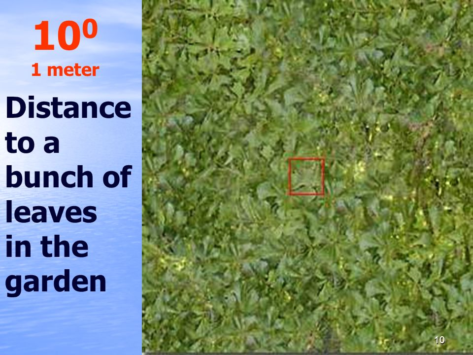 100 1 meter Distance to a bunch of leaves in the garden