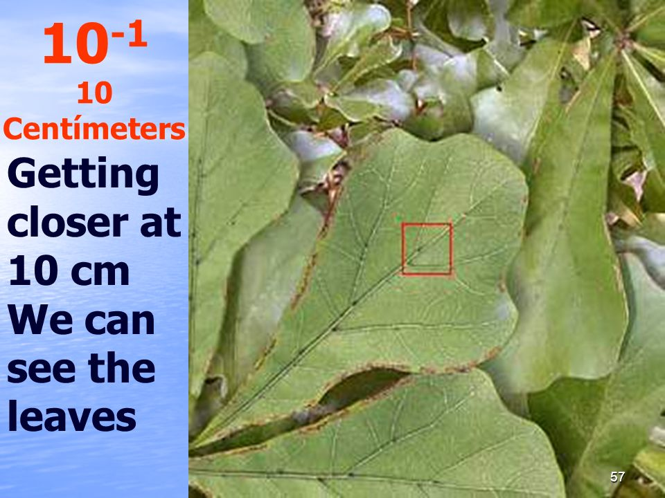 10-1 10 Centímeters Getting closer at 10 cm We can see the leaves