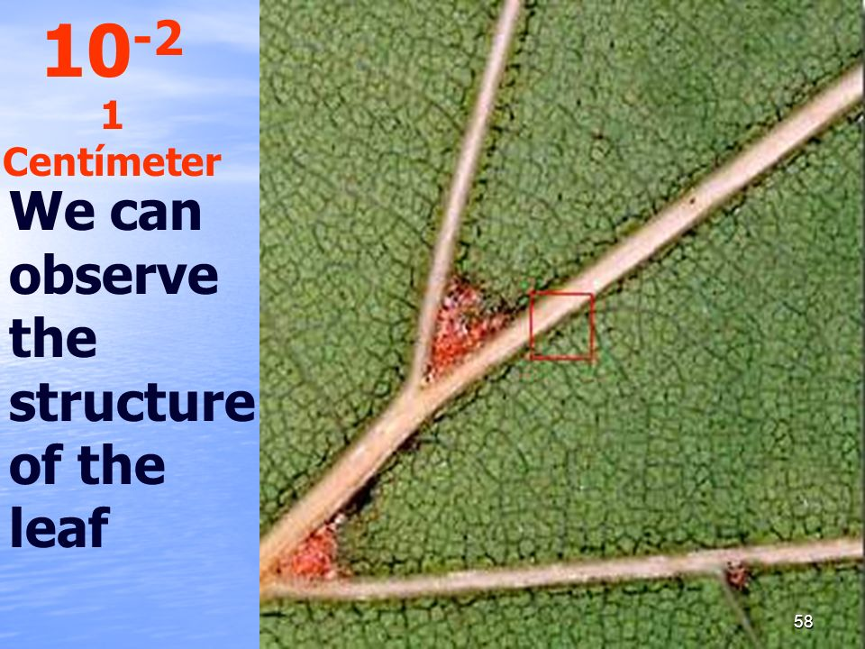 10-2 1 Centímeter We can observe the structure of the leaf