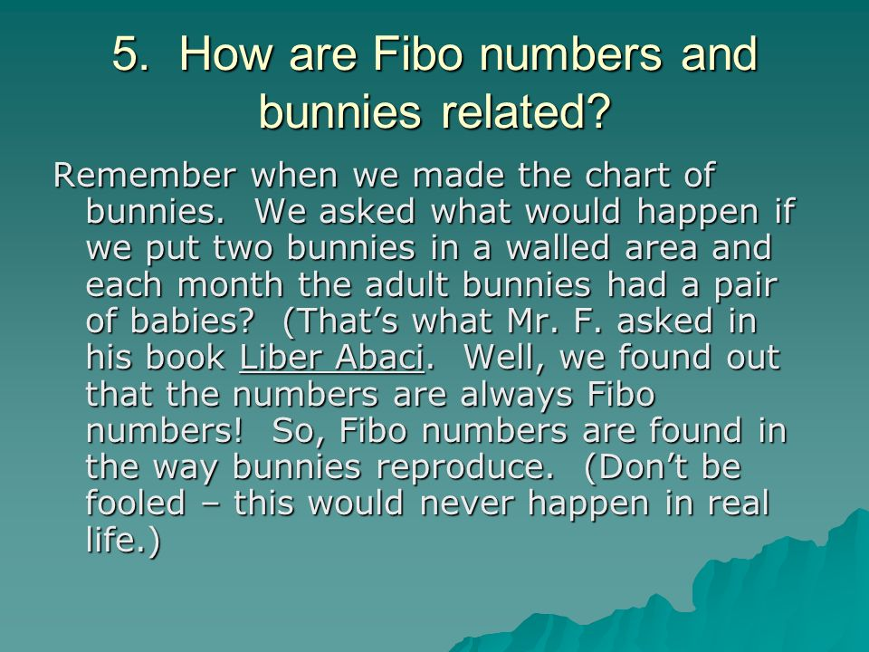 5. How are Fibo numbers and bunnies related
