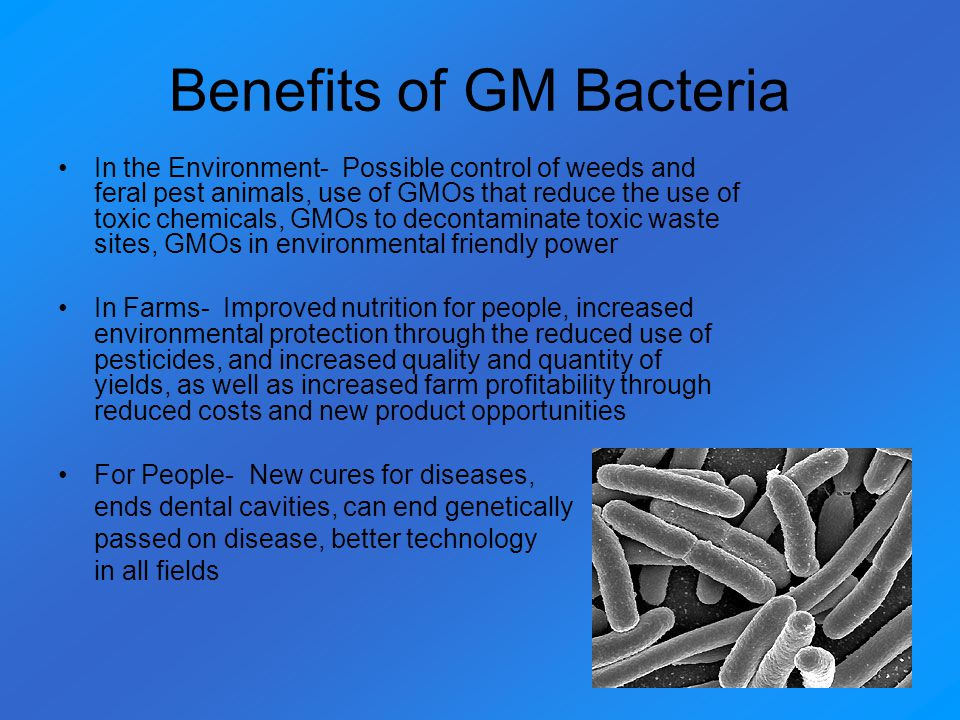 Benefits of GM Bacteria