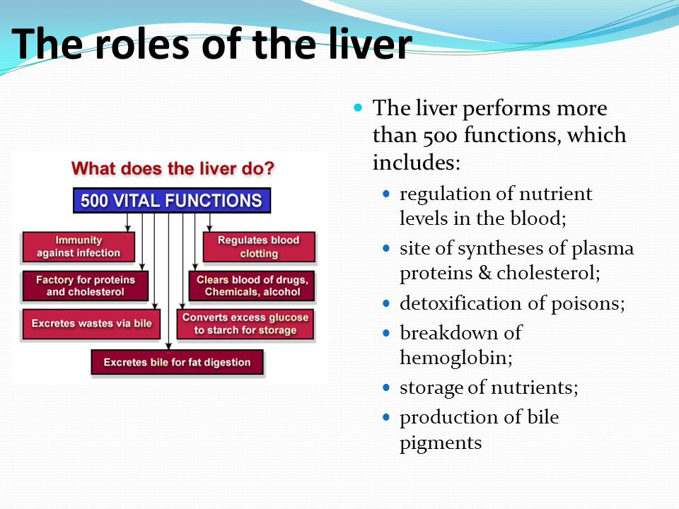 H4 Functions Of The Liver Ppt Video Online Download