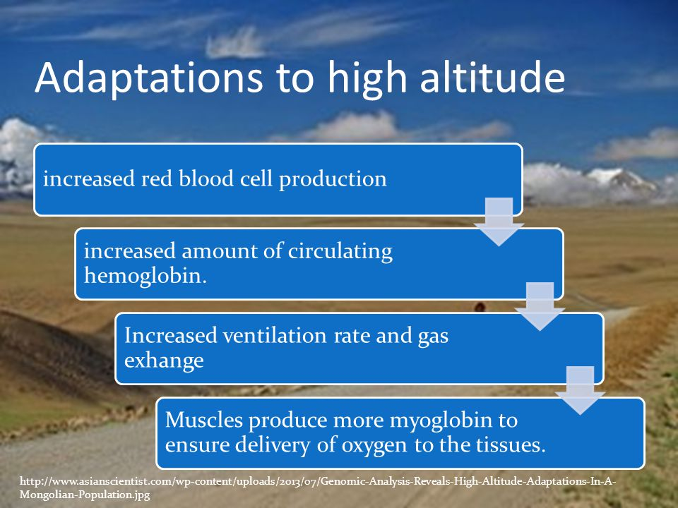 Adaptations to high altitude
