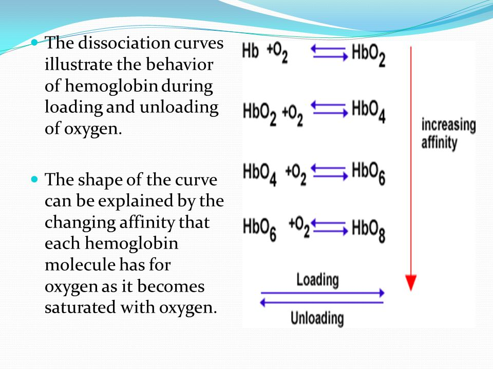 The dissociation curves illustrate the behavior of hemoglobin during loading and unloading of oxygen.