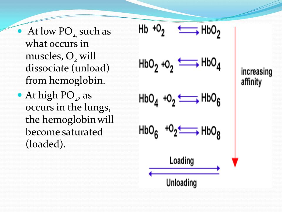 At low PO2, such as what occurs in muscles, O2 will dissociate (unload) from hemoglobin.